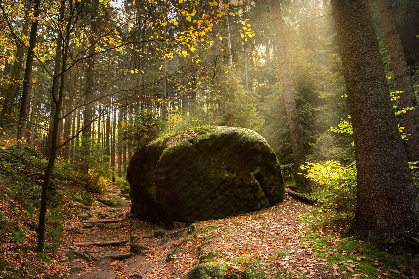 Forest in Saxon Switzerland