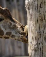 hotel kavalierhaus schloss machern zoo leipzig erleben