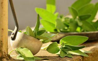 biolandgut tiefleiten krauter wellness