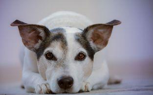 europa hotel greifswald urlaub mit hund