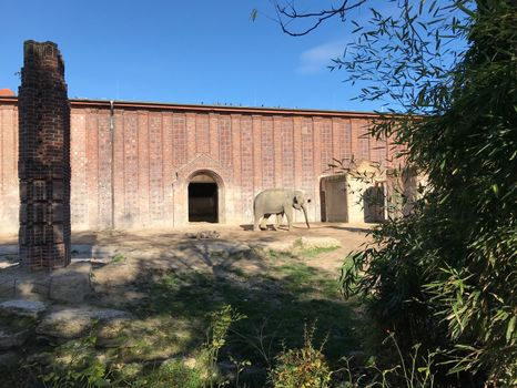Elephant in the Leipzig Zoo