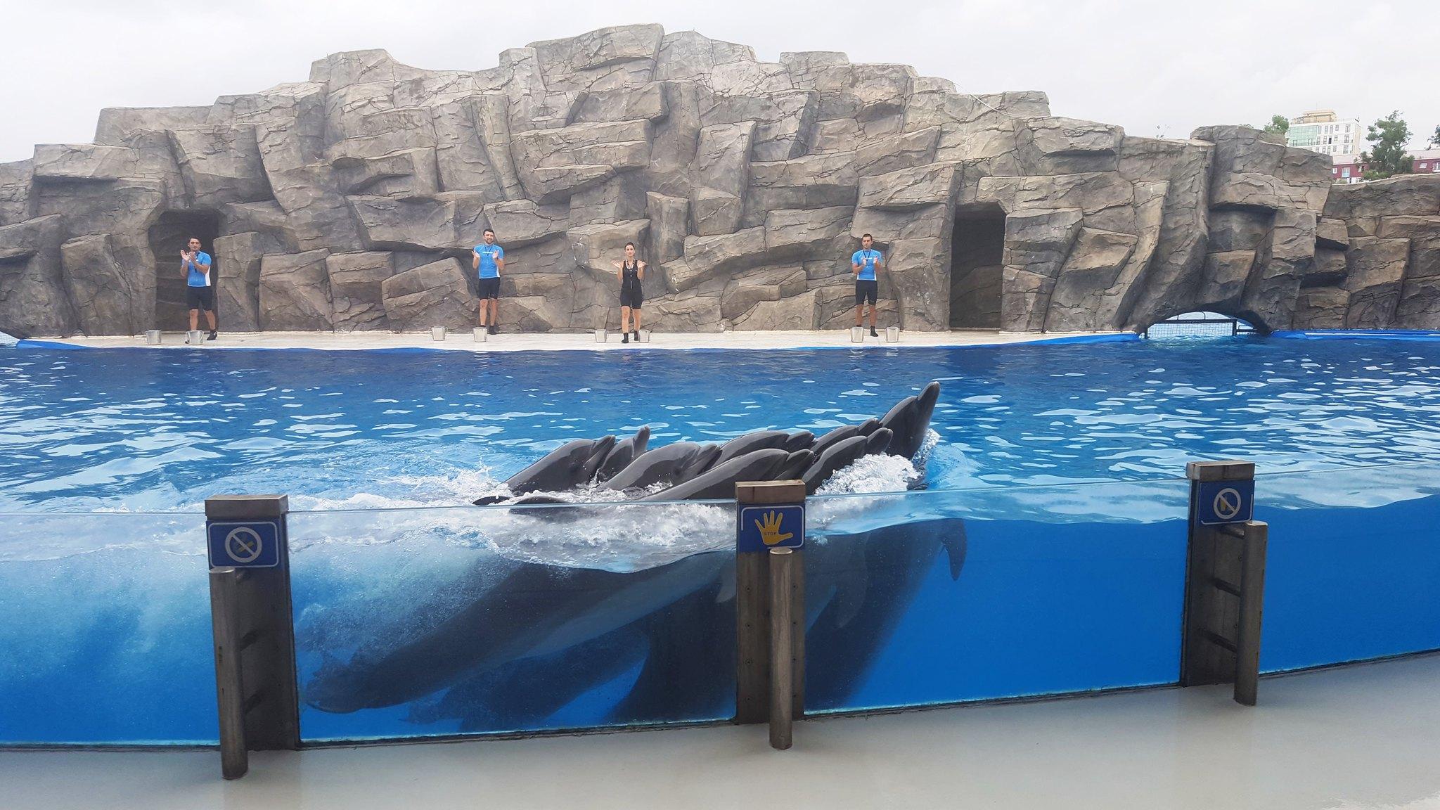 Dolphinarium, Batumi