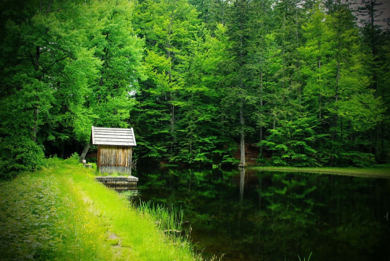 nationalpark bayrischer wald