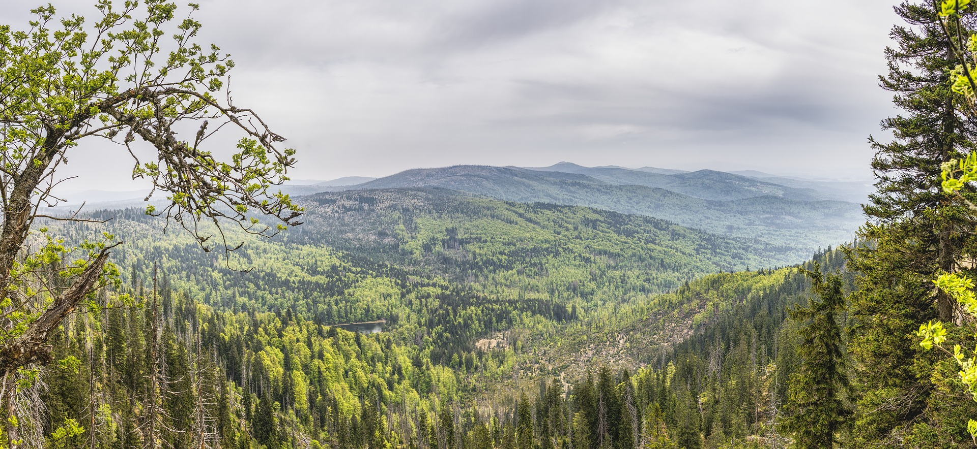 Mountain hikes in bavarian forest