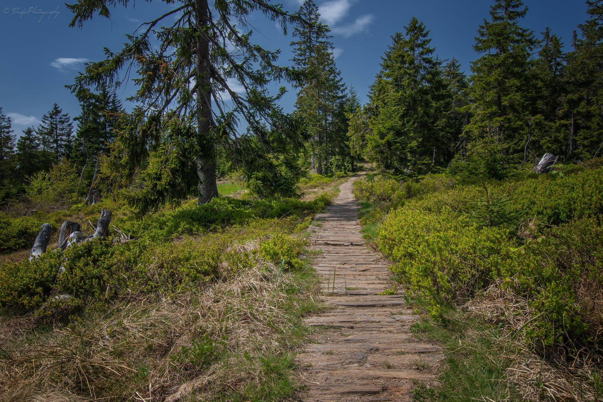 hiking in bavarian forest